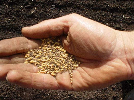 the-parable-of-the-mustard-seed