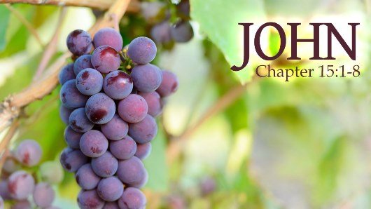 John-15-4-5-vine-and-branches