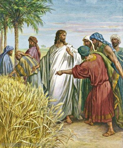 yesus-di-padang-gandum-dengan-para-murid-nya