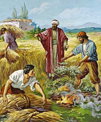 perumpamaan-gandum-dan-ilalang-mat-13-24-433