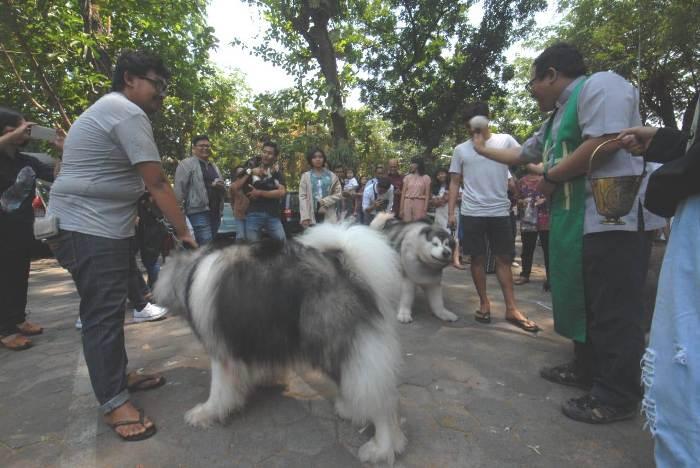 Pastor Paroki Bongsari Semarang sedang memberkati hewan (PEN@ Katolik/lat)