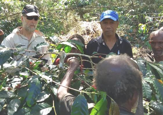 Tim Ekonomi Hijau Mr  Zhane (kiri) bersama Domi (topi biru) dan  warga Modio dalam  pelatihan memangkas ranting kopi (PEN@ Katolik/Frater Bastian)